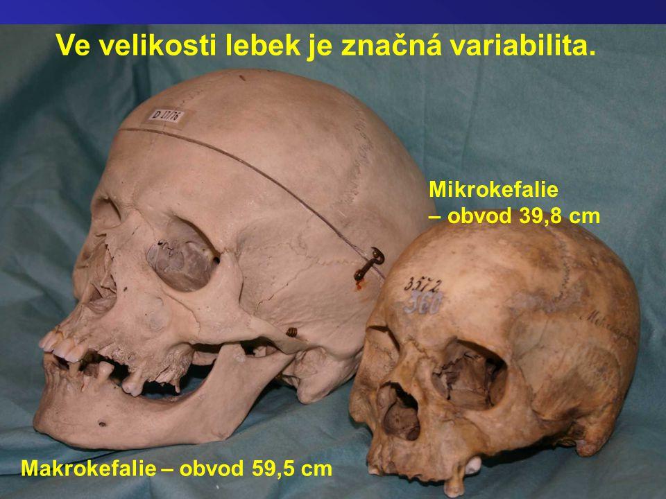 Ve velikosti lebek je značná variabilita.