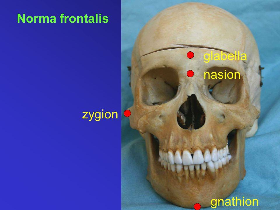 Norma frontalis glabella nasion zygion gnathion