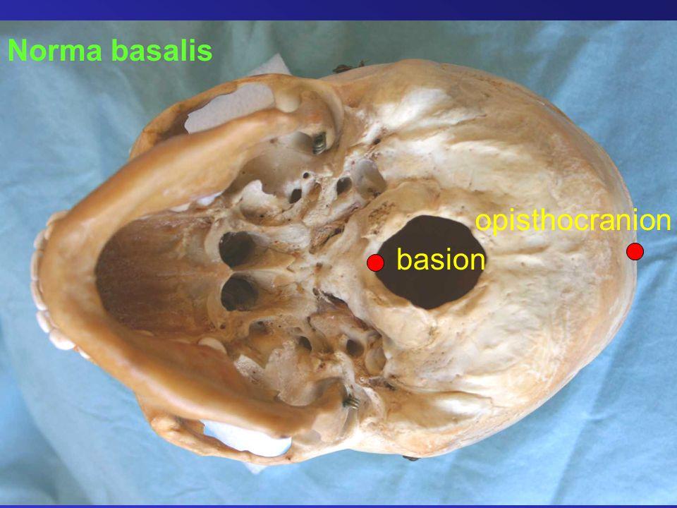Norma basalis opisthocranion basion