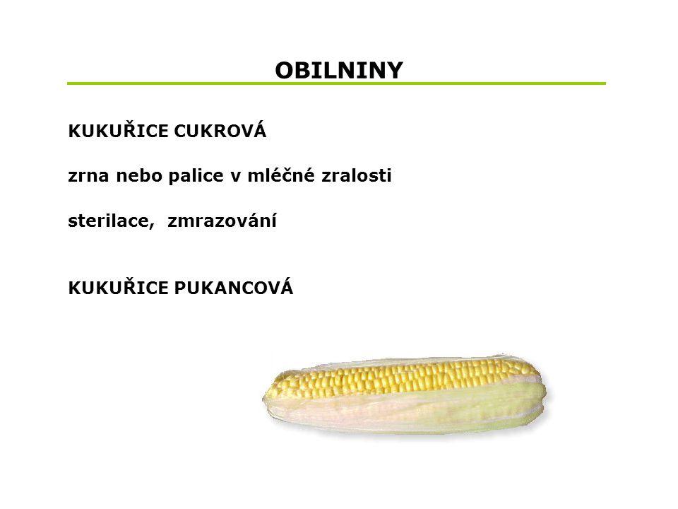 OBILNINY KUKUŘICE CUKROVÁ zrna nebo palice v mléčné zralosti
