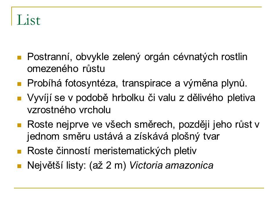 List Postranní, obvykle zelený orgán cévnatých rostlin omezeného růstu