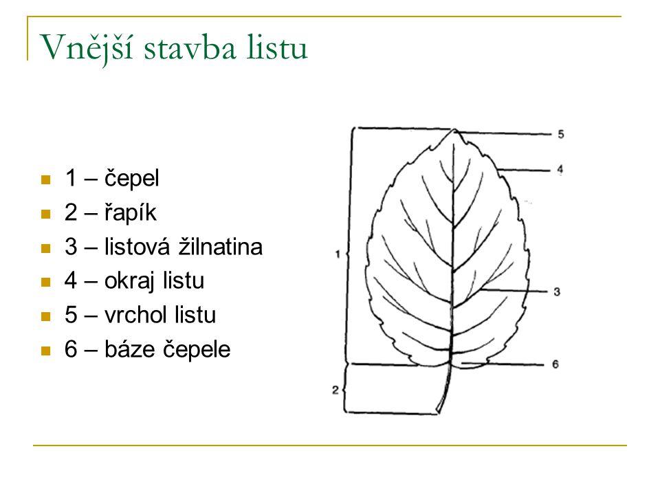 Vnější stavba listu 1 – čepel 2 – řapík 3 – listová žilnatina