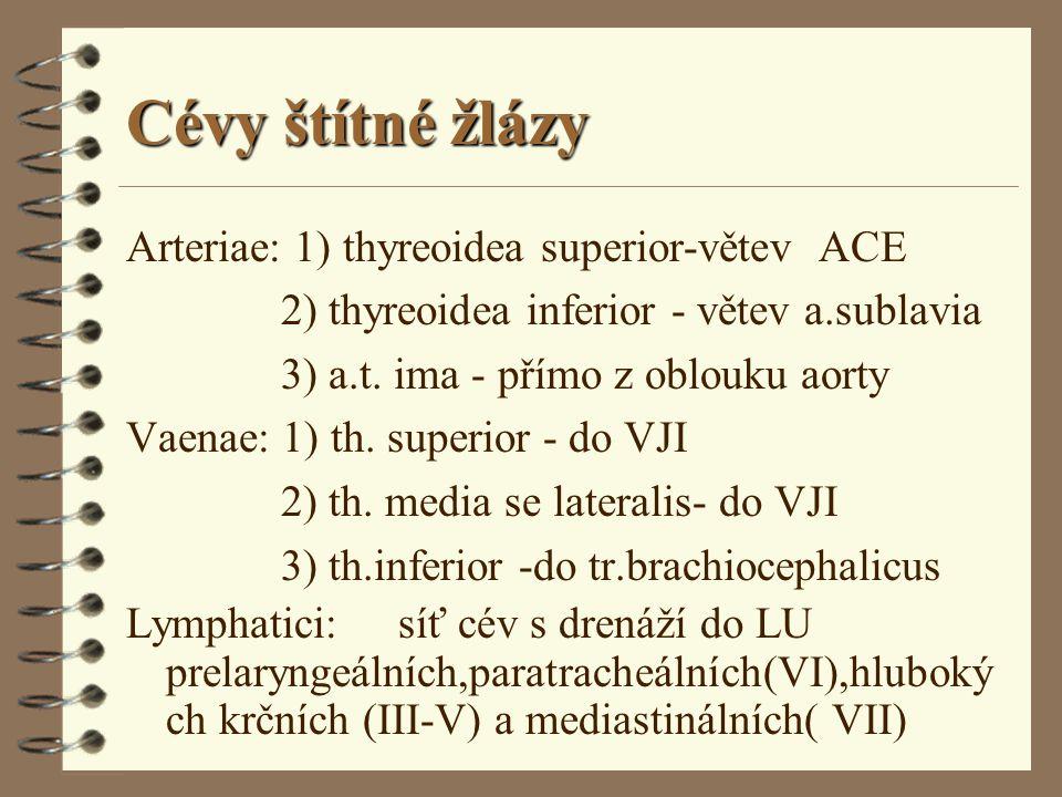 Cévy štítné žlázy Arteriae: 1) thyreoidea superior-větev ACE