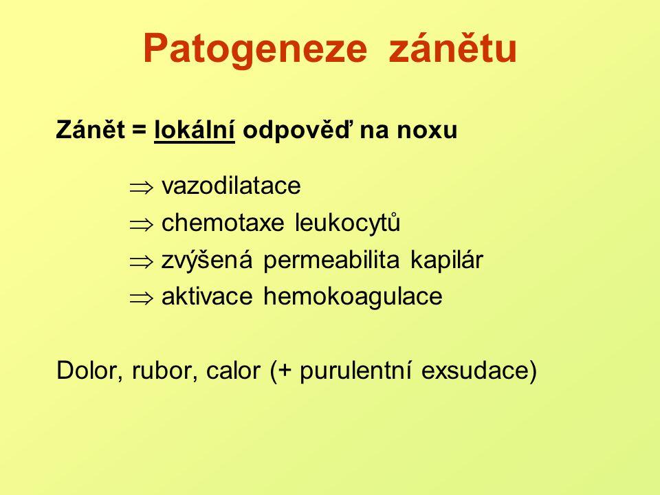 Patogeneze zánětu Zánět = lokální odpověď na noxu  vazodilatace
