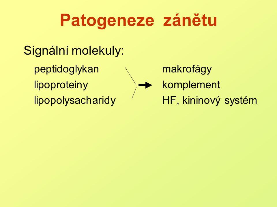 Patogeneze zánětu Signální molekuly: peptidoglykan makrofágy