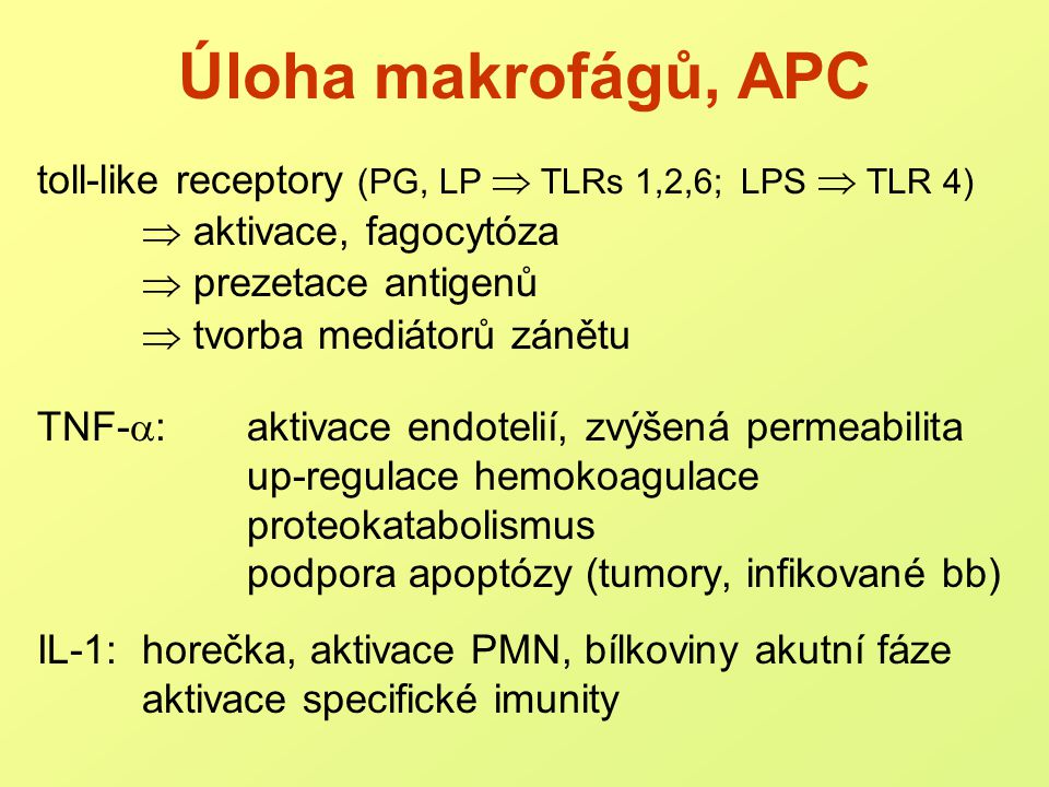Úloha makrofágů, APC toll-like receptory (PG, LP  TLRs 1,2,6; LPS  TLR 4)  aktivace, fagocytóza.