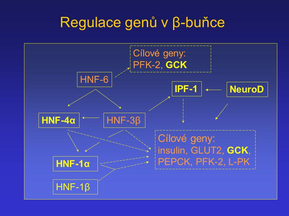Regulace genů v β-buňce
