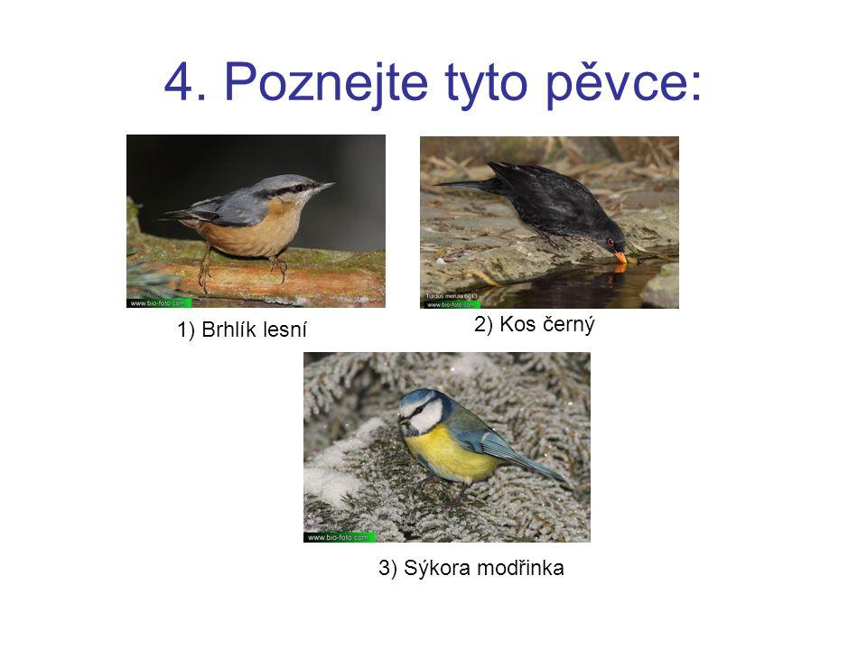 4. Poznejte tyto pěvce: 2) Kos černý 1) Brhlík lesní