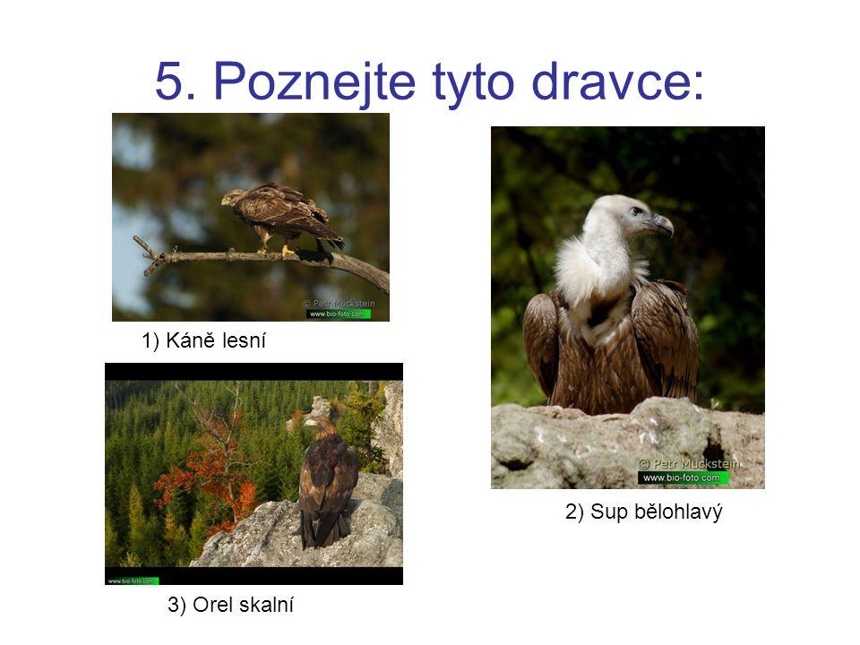 5. Poznejte tyto dravce: 1) Káně lesní 2) Sup bělohlavý 3) Orel skalní