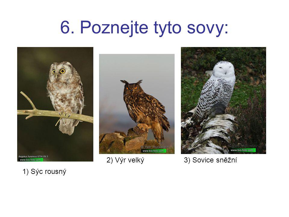 6. Poznejte tyto sovy: 2) Výr velký 3) Sovice sněžní 1) Sýc rousný