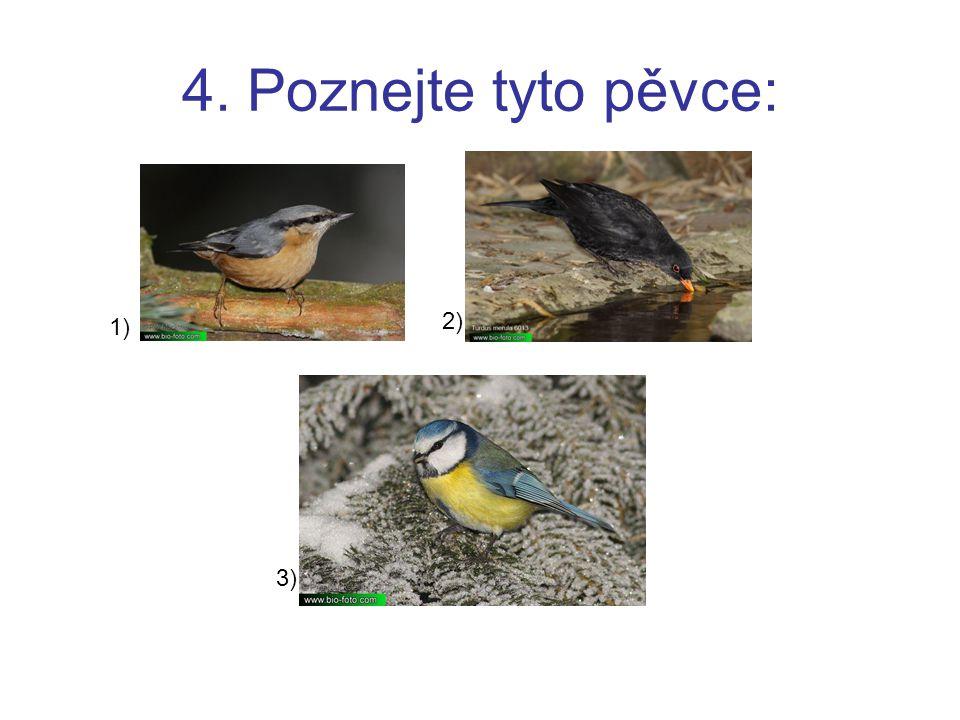 4. Poznejte tyto pěvce: 1) 2) 3)