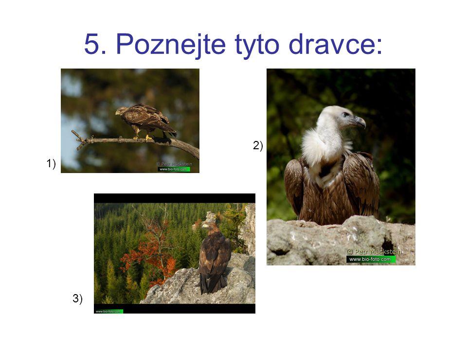 5. Poznejte tyto dravce: 2) 1) 3)