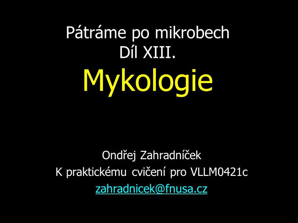 Pátráme po mikrobech Díl XIII. Mykologie