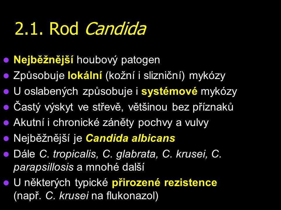 2.1. Rod Candida Nejběžnější houbový patogen