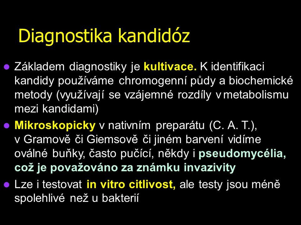 Diagnostika kandidóz