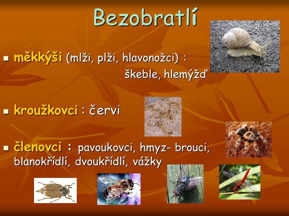 Bezobratlí měkkýši (mlži, plži, hlavonožci) : kroužkovci : červi