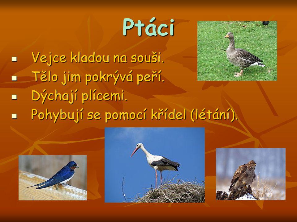 Ptáci Vejce kladou na souši. Tělo jim pokrývá peří. Dýchají plícemi.