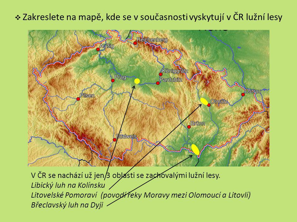 V ČR se nachází už jen 3 oblasti se zachovalými lužní lesy.