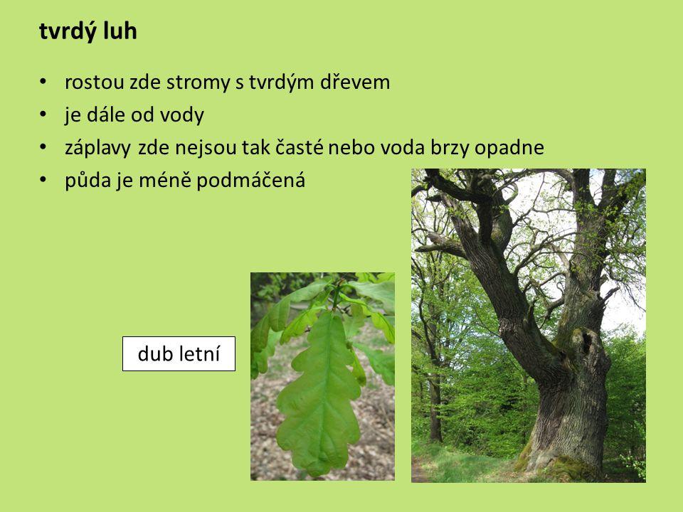 tvrdý luh rostou zde stromy s tvrdým dřevem je dále od vody