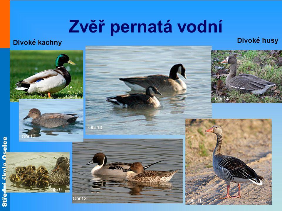 Zvěř pernatá vodní Divoké husy Divoké kachny Obr.8 Obr.14 Obr.10