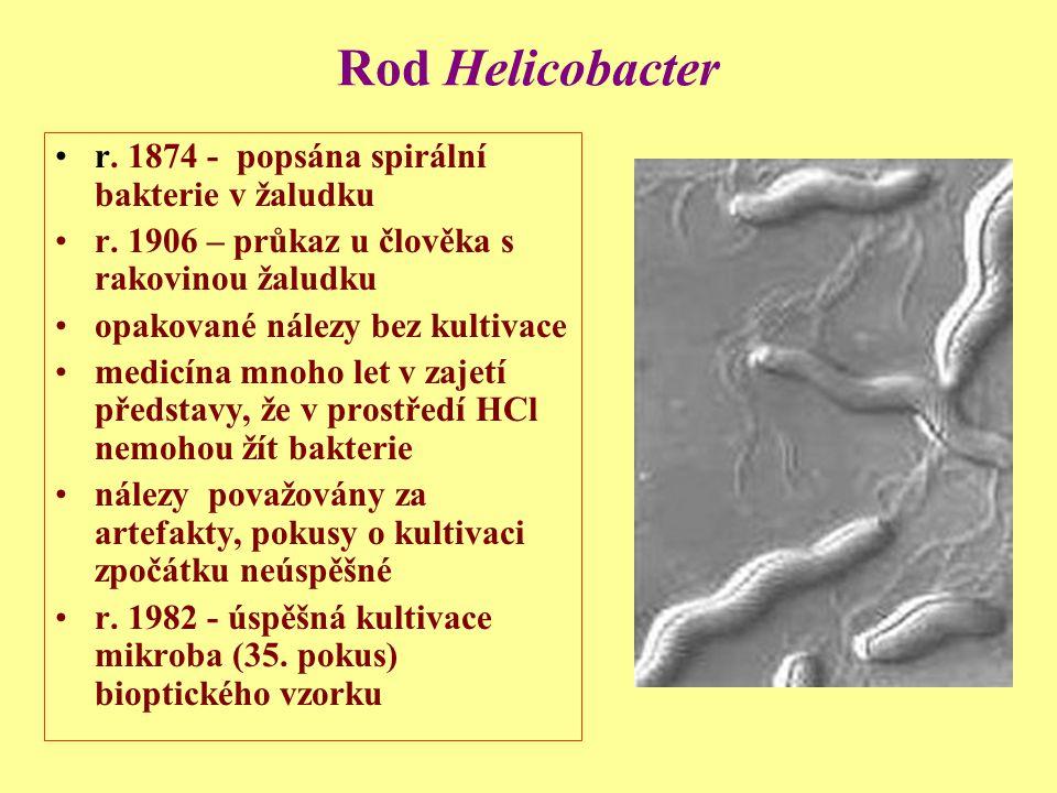 Rod Helicobacter r. 1874 - popsána spirální bakterie v žaludku