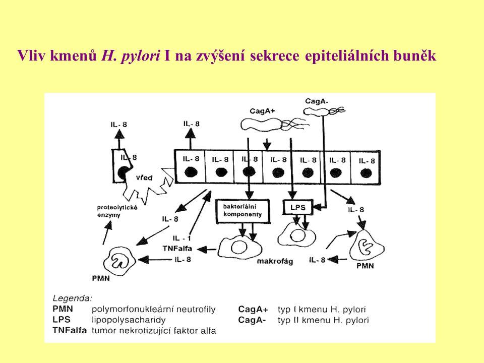 Vliv kmenů H. pylori I na zvýšení sekrece epiteliálních buněk