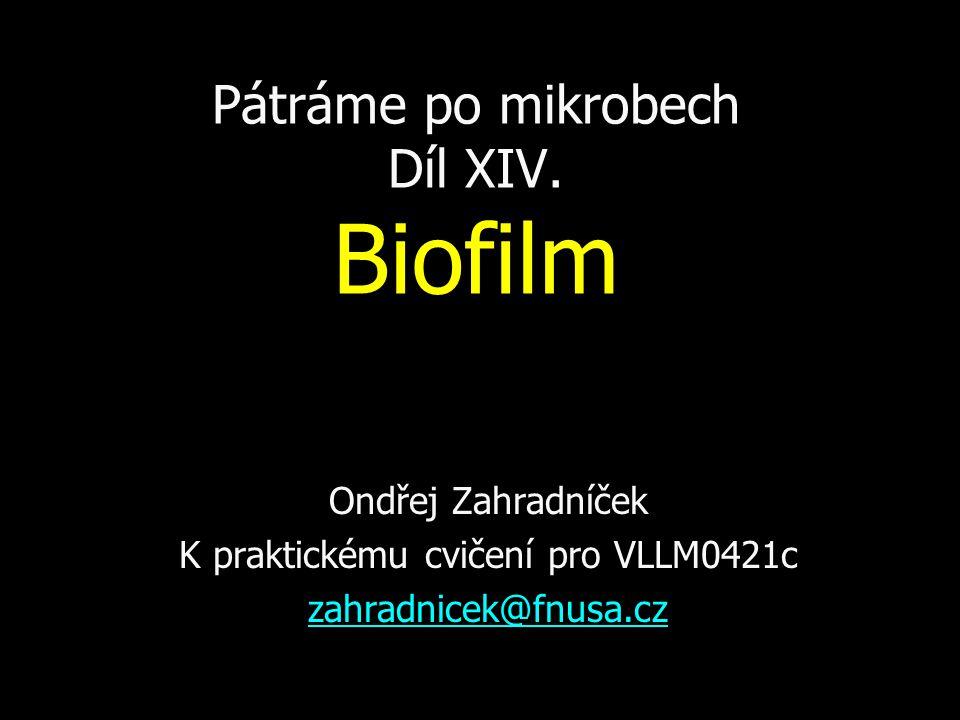 Pátráme po mikrobech Díl XIV. Biofilm