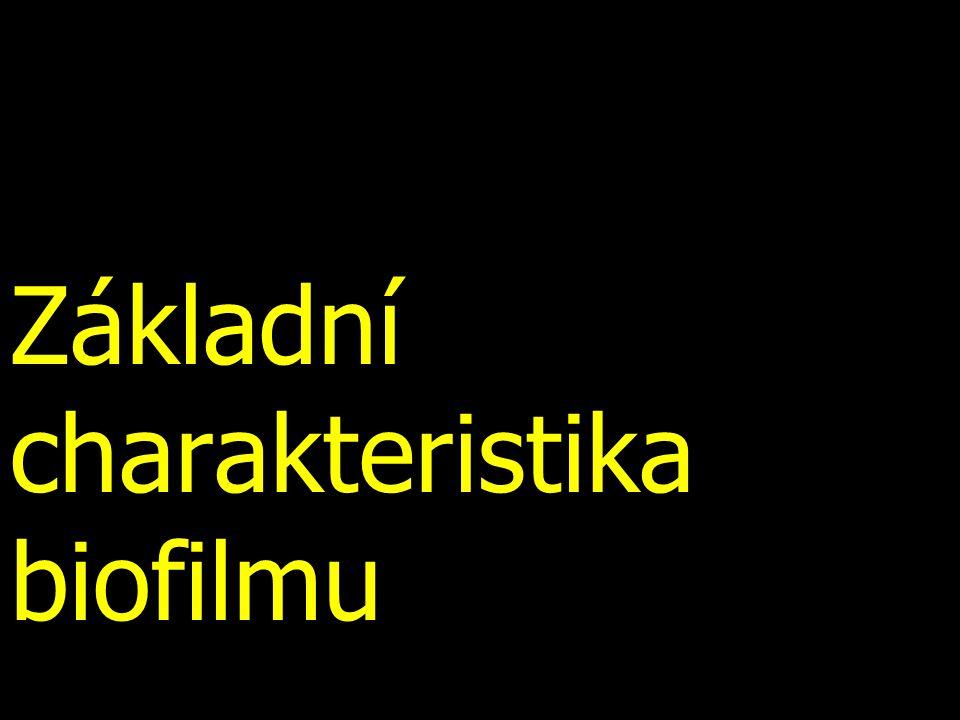 Základní charakteristika biofilmu