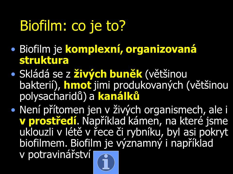 Biofilm: co je to Biofilm je komplexní, organizovaná struktura