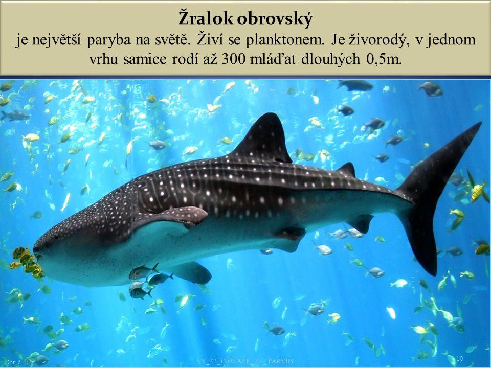 Žralok obrovský je největší paryba na světě. Živí se planktonem