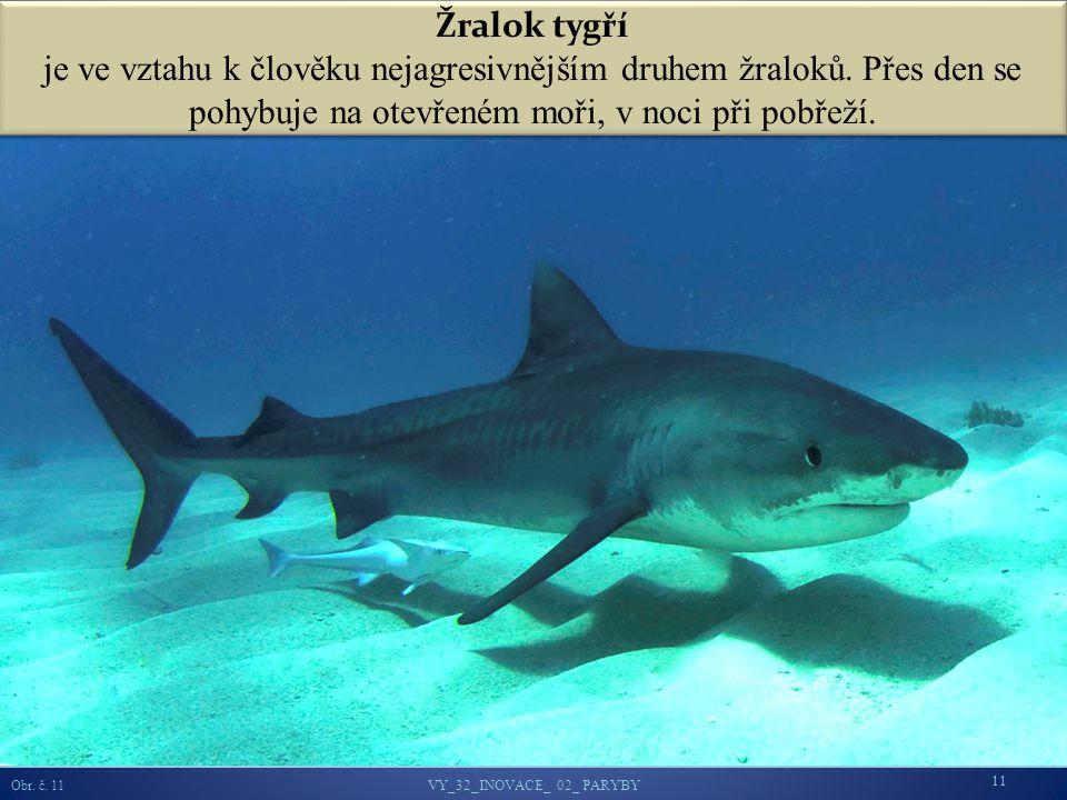 Žralok tygří je ve vztahu k člověku nejagresivnějším druhem žraloků