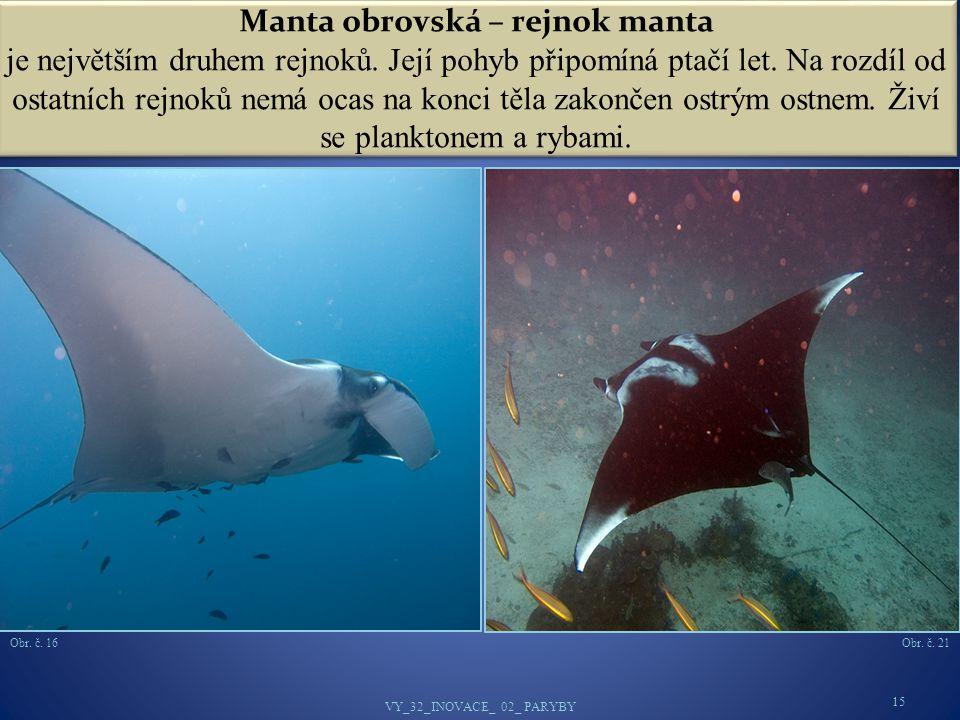 Manta obrovská – rejnok manta je největším druhem rejnoků
