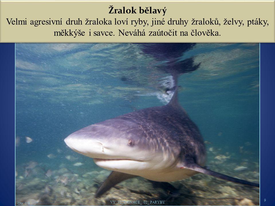 Žralok bělavý Velmi agresivní druh žraloka loví ryby, jiné druhy žraloků, želvy, ptáky, měkkýše i savce. Neváhá zaútočit na člověka.