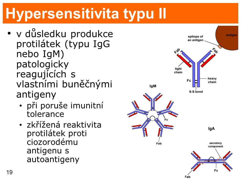 Hypersensitivita typu II