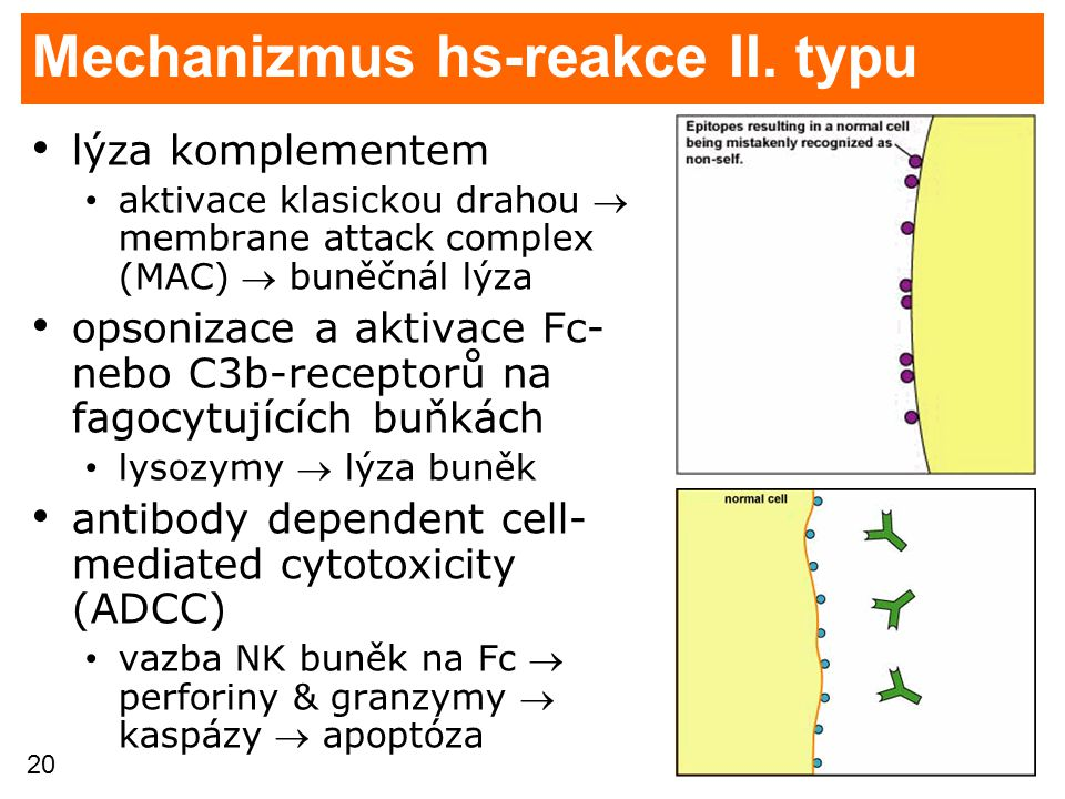 Mechanizmus hs-reakce II. typu