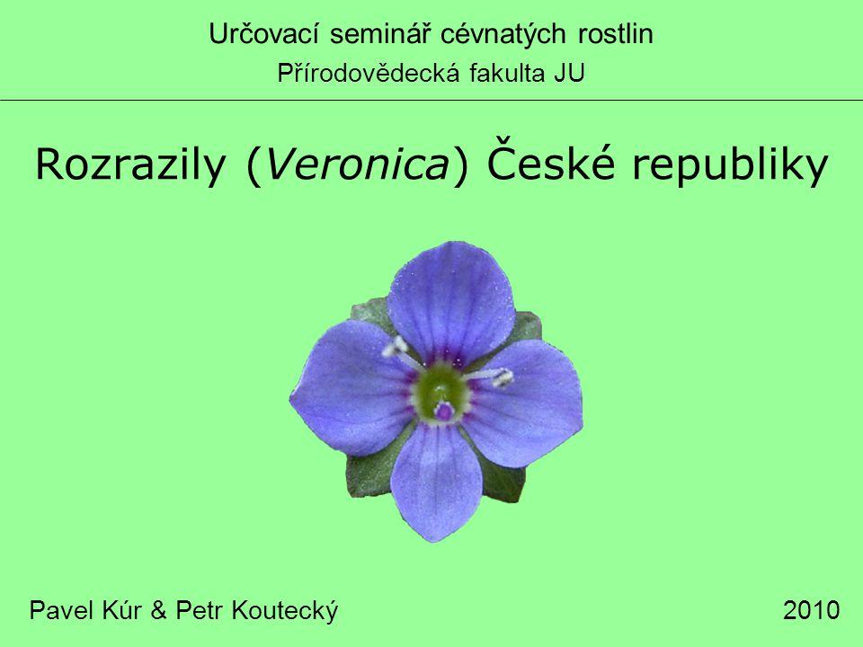 Rozrazily (Veronica) České republiky