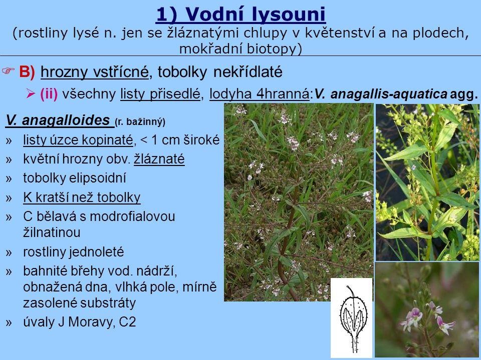 1) Vodní lysouni (rostliny lysé n