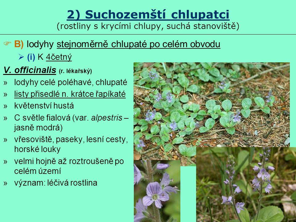 2) Suchozemští chlupatci (rostliny s krycími chlupy, suchá stanoviště)