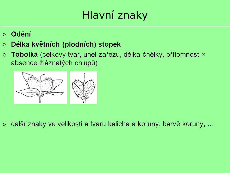 Hlavní znaky Odění Délka květních (plodních) stopek
