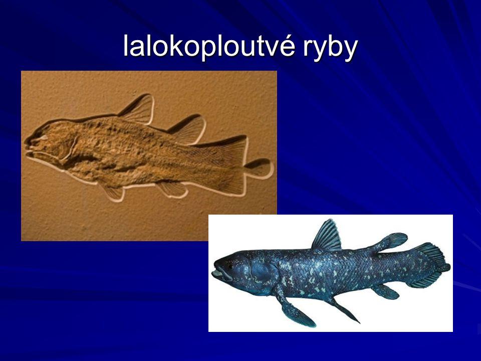 lalokoploutvé ryby