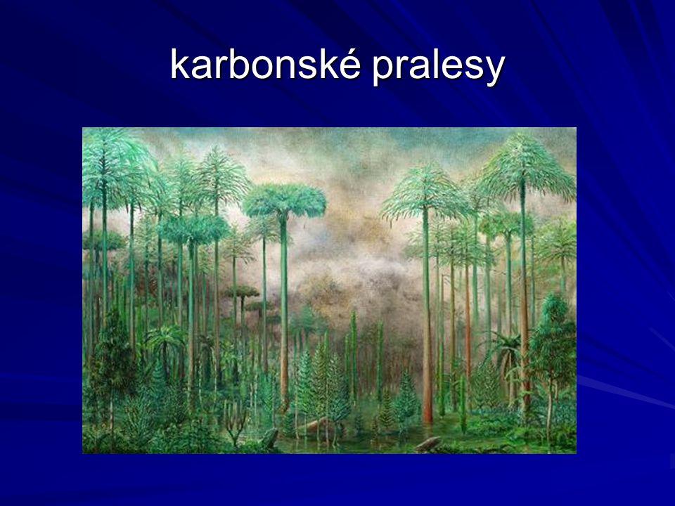 karbonské pralesy