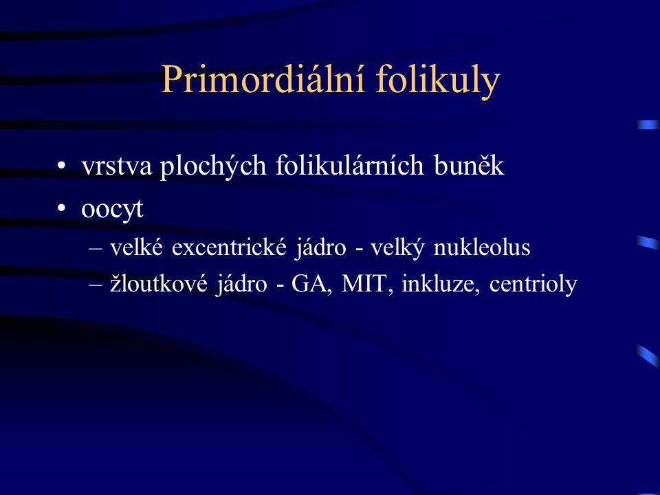 Primordiální folikuly