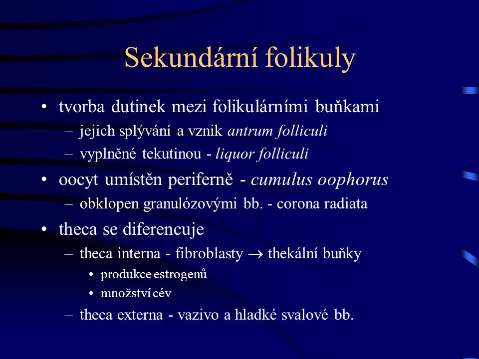 Sekundární folikuly tvorba dutinek mezi folikulárními buňkami