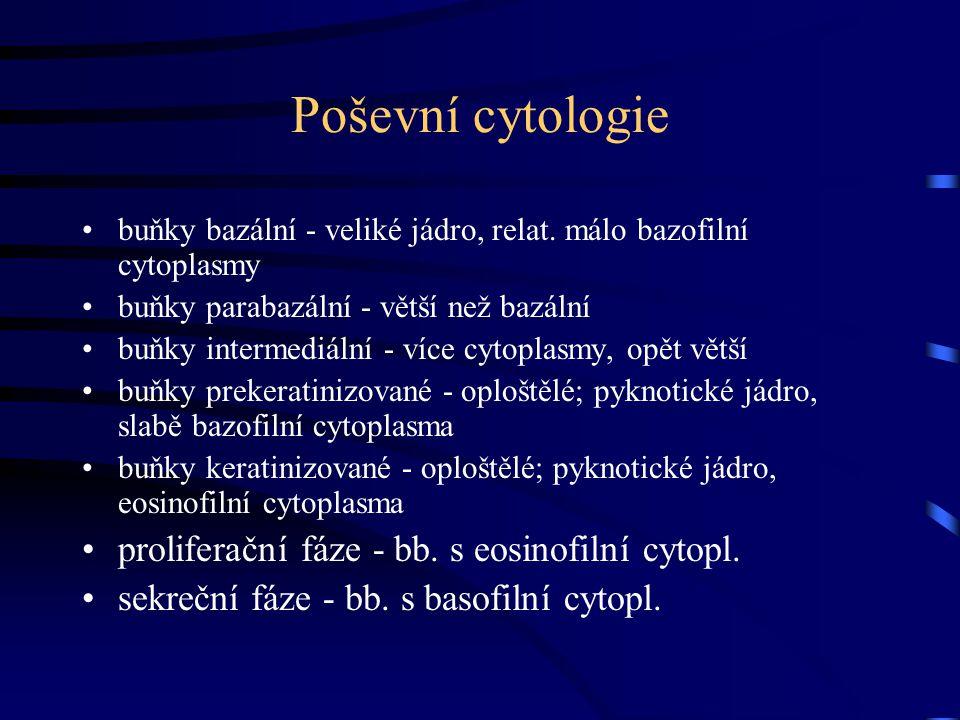 Poševní cytologie proliferační fáze - bb. s eosinofilní cytopl.