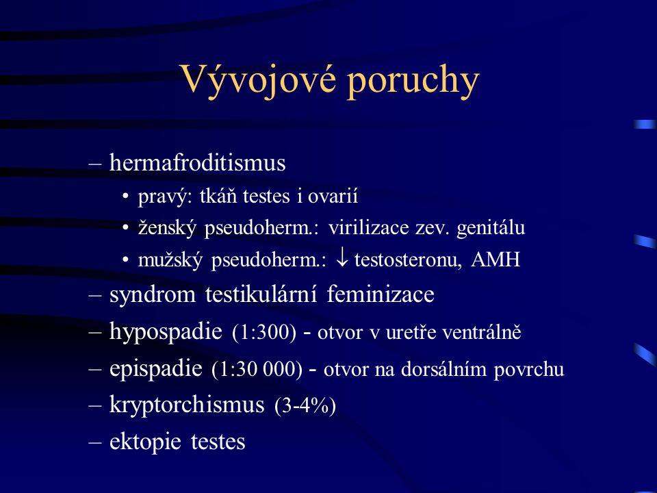 Vývojové poruchy hermafroditismus syndrom testikulární feminizace