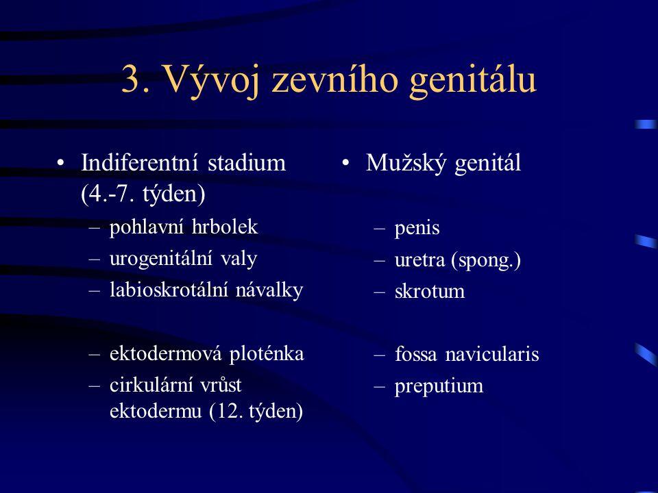 3. Vývoj zevního genitálu
