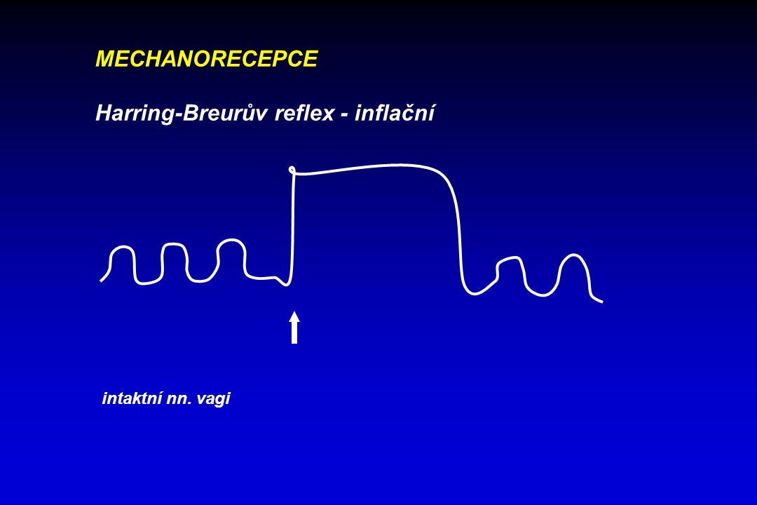 Harring-Breurův reflex - inflační