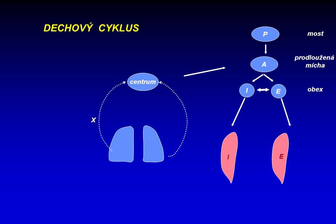 DECHOVÝ CYKLUS P most prodloužená mícha obex A centrum I E X I E