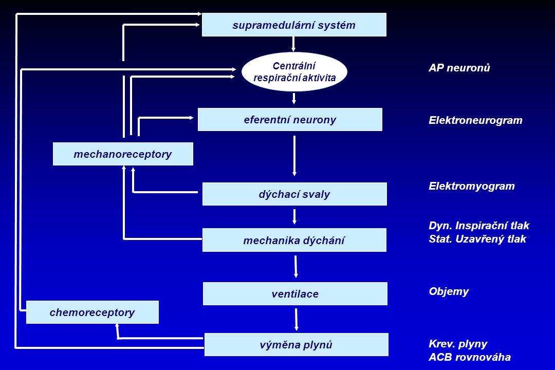 supramedulární systém