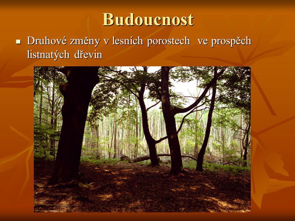 Budoucnost Druhové změny v lesních porostech ve prospěch listnatých dřevin